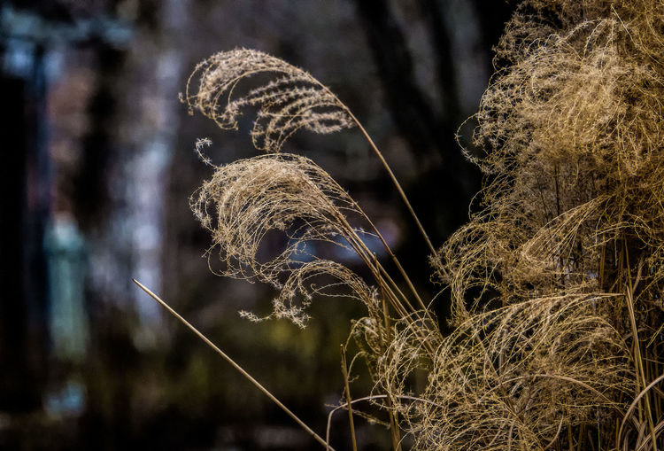 Blowing in the wind Focus On Foreground No People Nature Plant Close-up Outdoors Beauty In Nature Tree Field Grasses In The Wind Prairie Grass Winter Growth