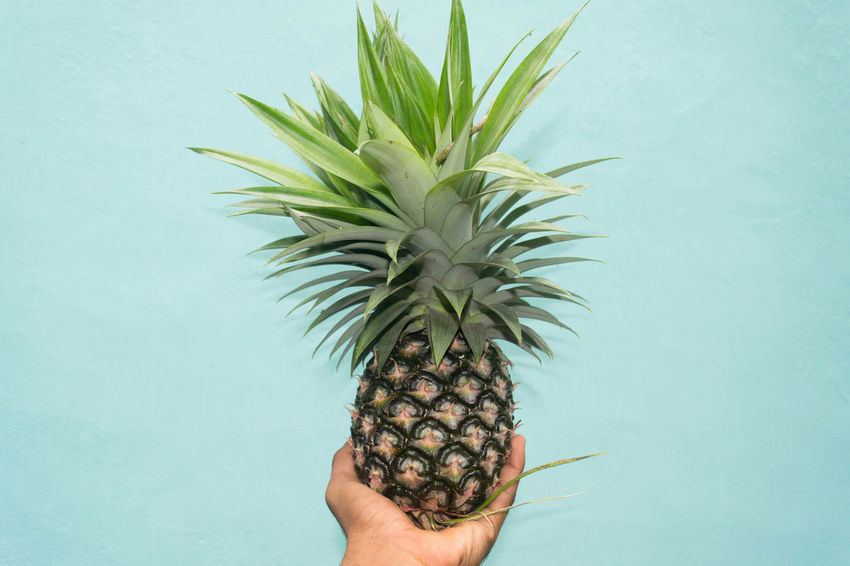 Pineapple Human Body Part Human Hand One Person People Colored BackgroundPineapple Plant Pineapple Juice Things I Like Fruit Palm Tree One Man Only Only Men Indoors  Adult Adults Only Close-up Day Freshness Fruits Fruit Bowl Nature Porn First Eyeem Photo Fruit Plant Tree