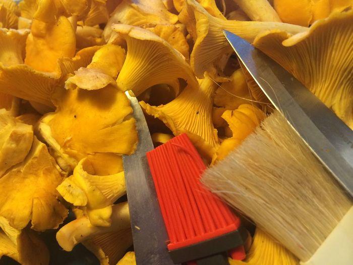Clear Sky Knife Mushrooms Brush Chantarelles Clear Chantarelles Clear Mushrooms Food
