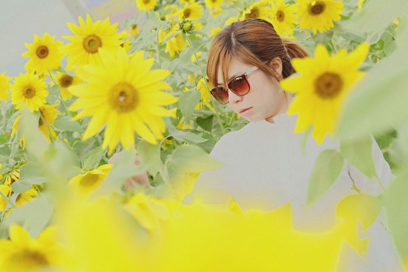 Funny EyeEm Sunflower And Sunset
