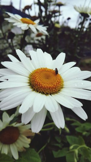 Nature Flower Insect