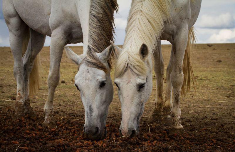 White Horses On Field