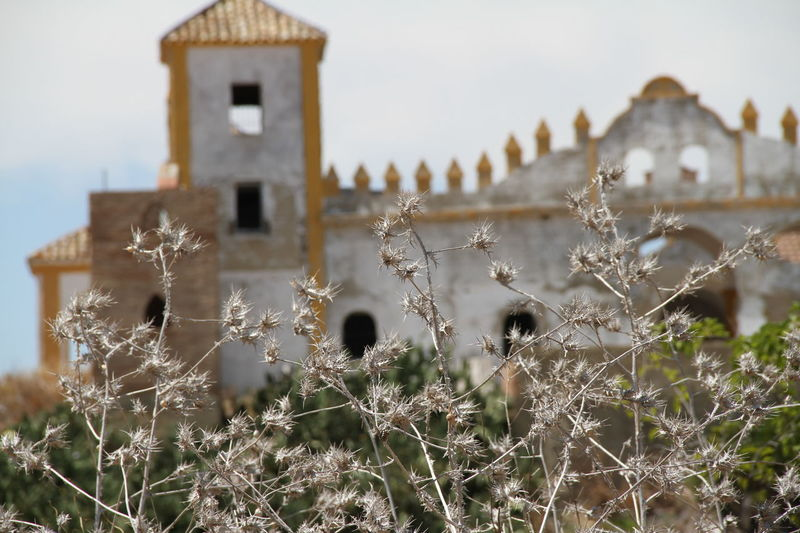 Andalucía Architecture Building Exterior Built Structure Day Dry Focus On Foreground Nature No People Outdoors Sky Summer Thistles