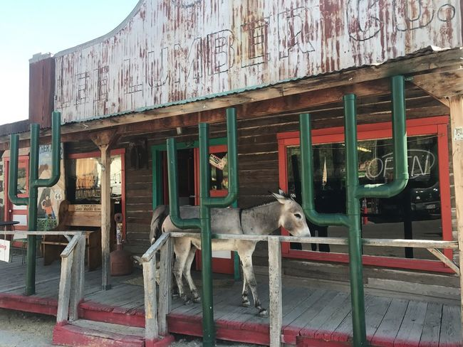 Built Structure Mammal Animal Themes Architecture Day No People Domestic Animals Outdoors Building Exterior Pets Donkey Route 66 Travel Destinations