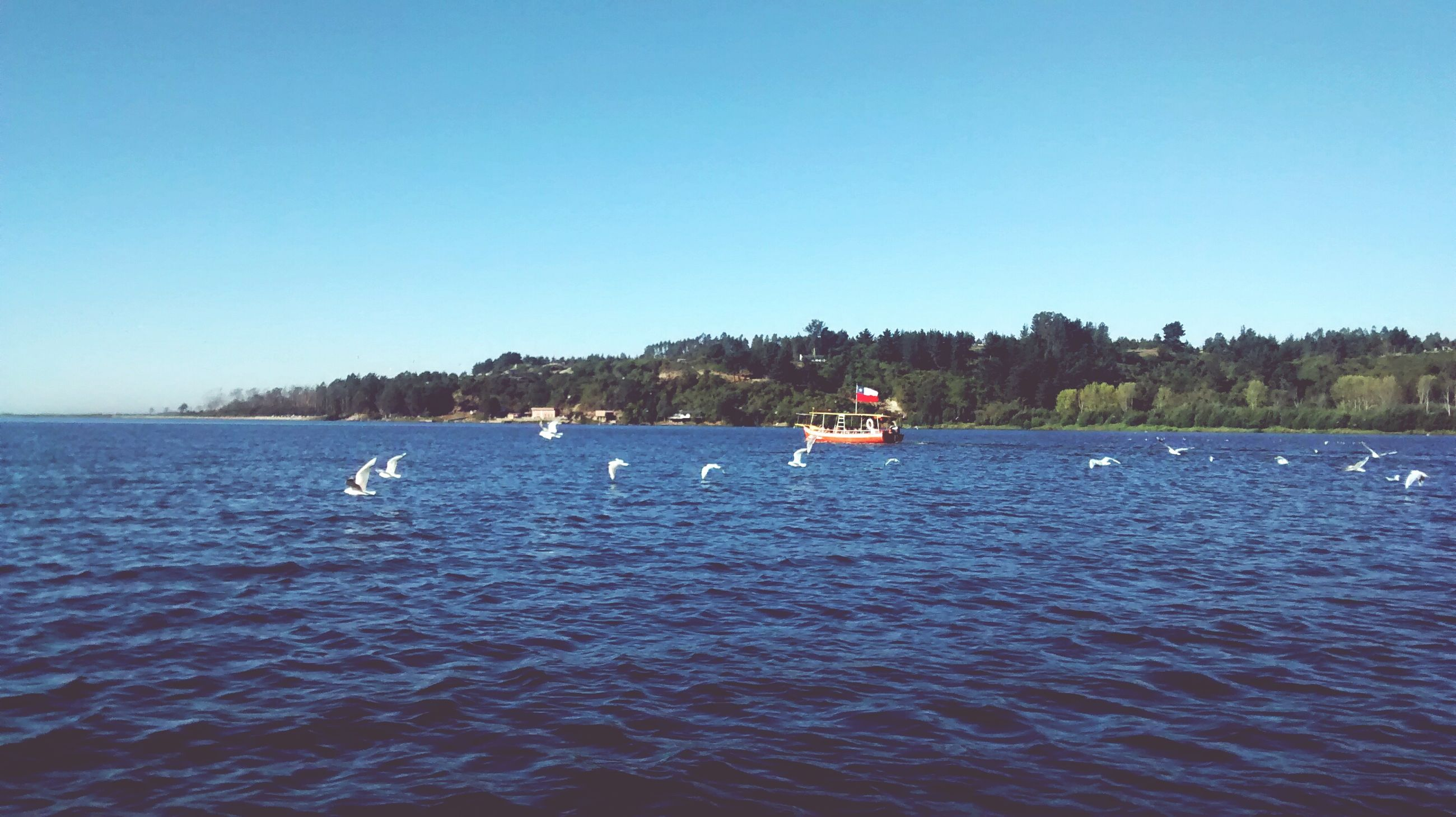 water, nautical vessel, transportation, clear sky, boat, mode of transport, copy space, waterfront, blue, tree, nature, tranquil scene, tranquility, scenics, sea, beauty in nature, rippled, lake, day, moored