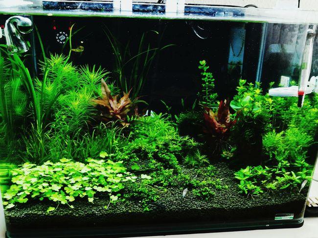Aquarium Aqua Aquascaping Aquarium Life Hobby Aquaristik