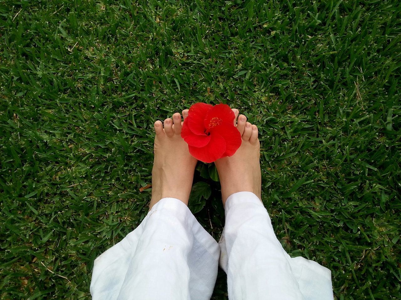Low section of woman holding red hibiscus with leg on grass