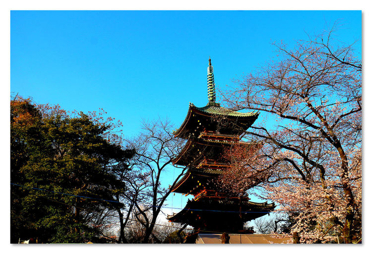 Spring Into Spring Springtime Spring Has Arrived Spring! Spring2015 Japannes Templetower Japanese Temple Templetower Hanging Out Check This Out