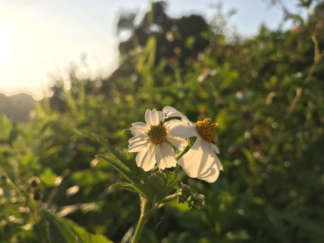 Sun rise with flower Flower Nature Growth Petal Fragility Animal Themes One Animal Insect Flower Head Plant Freshness Animals In The Wild Day No People Focus On Foreground Outdoors Beauty In Nature Blooming Close-up