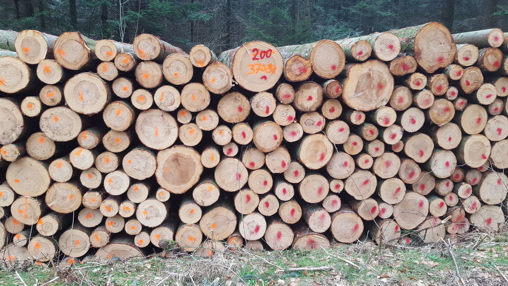 EyeEmNewHere EyeEm Gallery EyeEm Nature Lover EyeEm Selects Forestry Industry Woodpile Stack Heap Timber Wood - Material Log Deforestation Environmental Issues Lumber Industry Wood Bark Brown Color Wooden