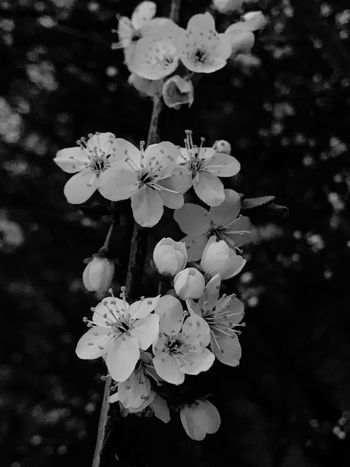 EyeEm Nature Lover EyeEmNewHere Plant Flowering Plant Flower Freshness Growth Beauty In Nature Fragility Petal Flower Head Vulnerability  Inflorescence Close-up Nature Focus On Foreground Tree Day No People Blossom White Color Pollen