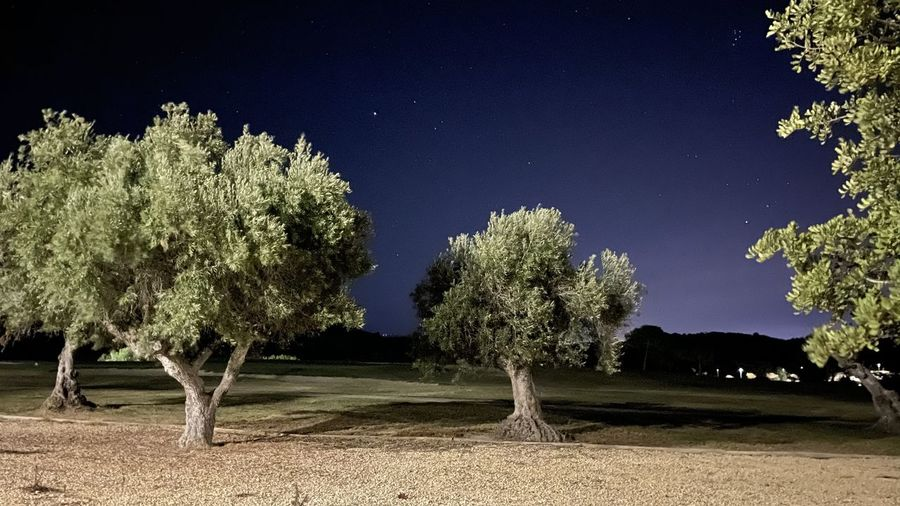Trees on field against sky at night