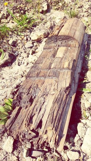 You do it to yourself Day High Angle View Sunlight No People Outdoors Sand Shadow Nature Close-up Wood - Material Log