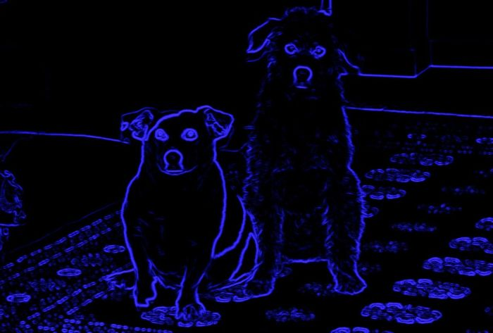 Animal Architecture Cool Dog Creative Light And Shadow Dogs My Dog Outline Purple Door Silhouette Two Dogs