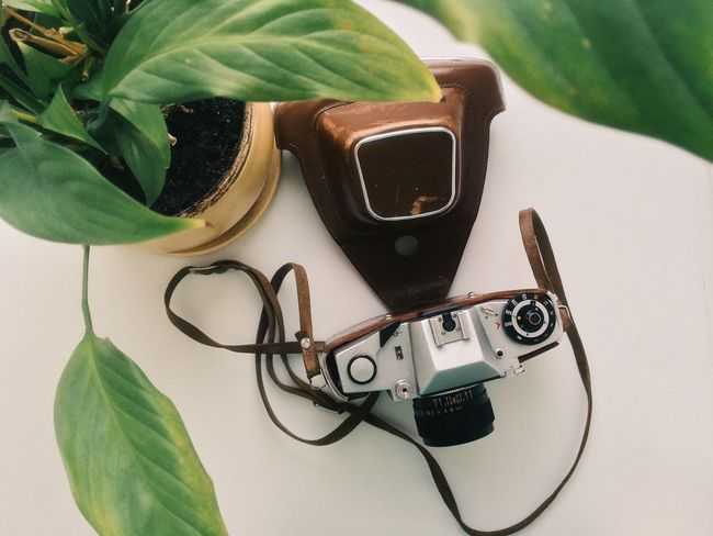 Camera Composition Directly Above Film Indoors  Kiev Organic Plant Retro Still Life Vintage