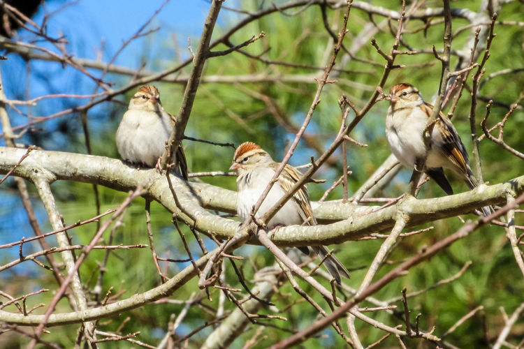 Finches birds perched on tree limb