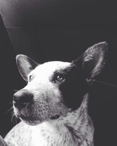 Myfriend Dog