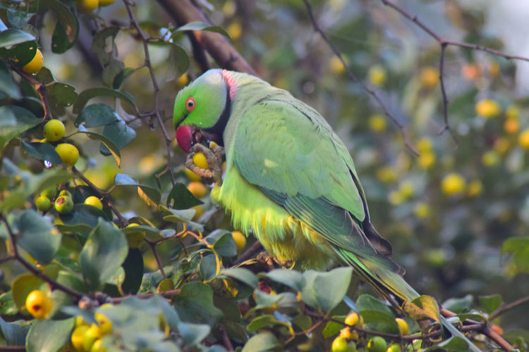 Parrot Animal Wildlife Animals In The Wild Beauty In Nature Bird Branch Close-up Cockatoo Day Green Color Nature No People Outdoors Parrot Perching Tree