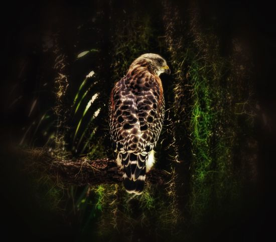 A cool shot of this hawk... EyeEm Nature Lover EyeEm Nature Collection EyeEm Nature Lovers EyeEm Birds