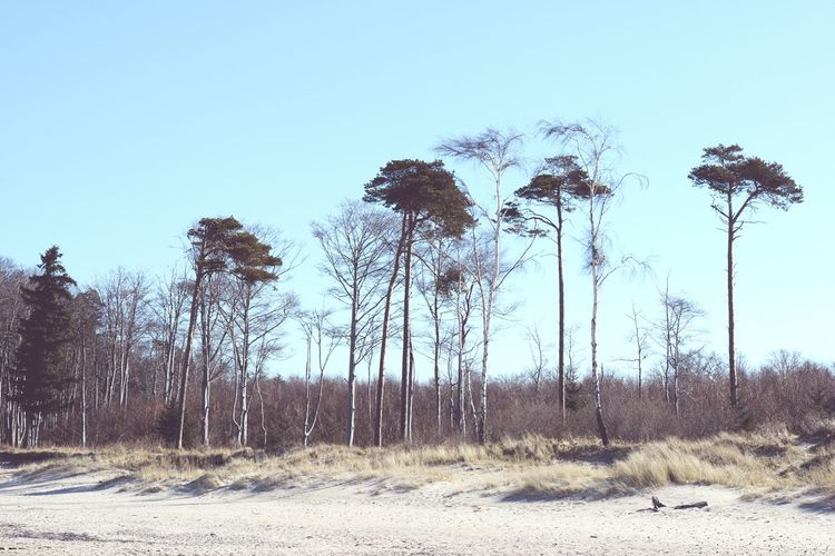 Baltic Sea landscape of Darss peninsula (Mecklenburg-Vorpommern, Germany) in springtime. Baltic Sea Baltic Sea Winter Beach Darß Darß Dunes Germany Landscape Low Angle View Mecklenburg-Vorpommern No People Non-urban Scene Ocean Outdoors Sand Shore Tourism Tranquil Scene Tree Tree Trunk Water