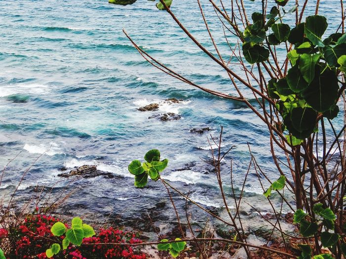 THE SEA, FLOWERS, AND LEAVES Nature Outdoors Leaf Day Tree Growth Beauty In Nature Water Branch Flower No People Plant