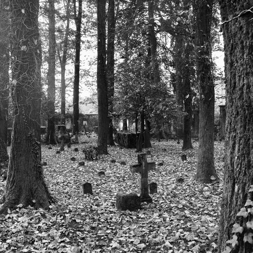 Inside the Old Cemetery of Viggiù, Varese, Lombardy, Italy. Black & White Cemetery Cross Funerary Lombardy Art Black And White Black And White Photography Blackandwhite Blackandwhite Photography Bnw Bnw_captures Bnw_collection Italy Monochromatic Monochrome Monochrome Photography No People Old Outdoors Tombstone Tranquility Tree Varese Viggiù