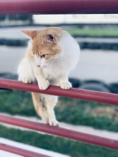 Close-up of cat looking through railing