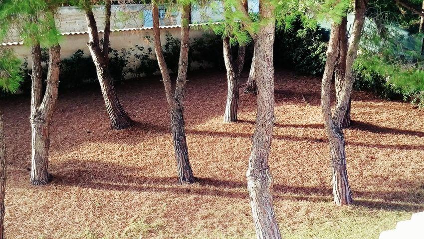Trees Sunshine Garden
