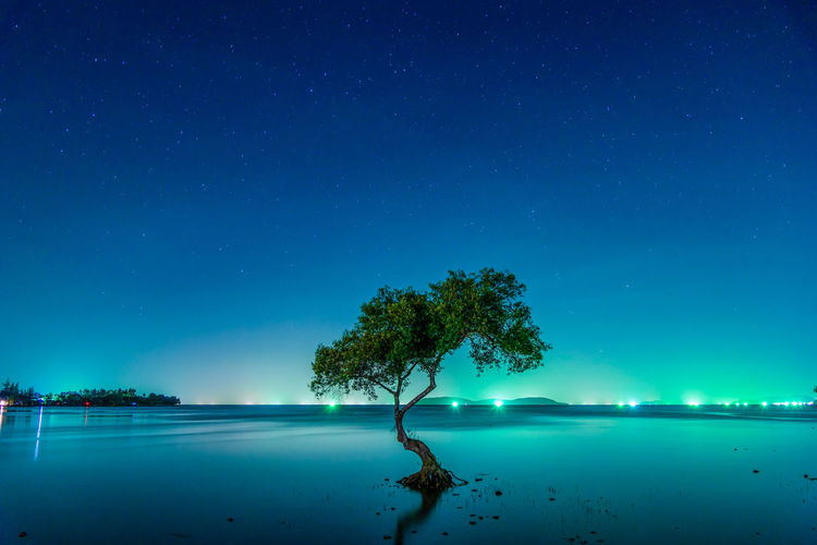 Tree at beach against sky at night