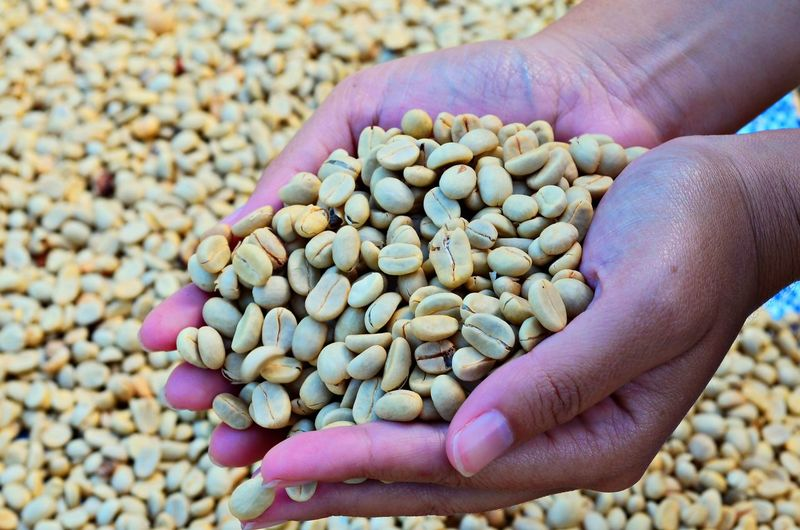 Cropped image of human hands holding coffee beans
