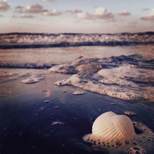 Seashell at beach against sky