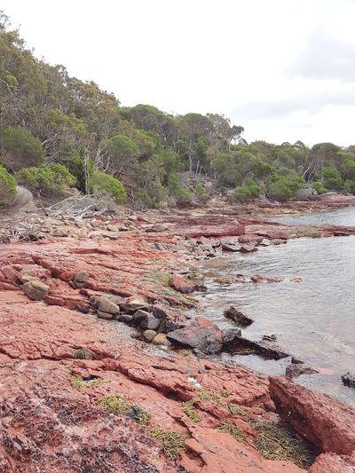 Ben Boyd National Park Nsw National Park Sapphire Coast Bay Australia Ben Boyd Red Rocks  Coast Sunrise Beach
