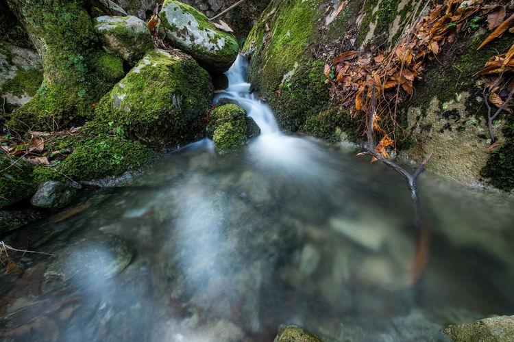 Tree Waterfall Moss Rapid