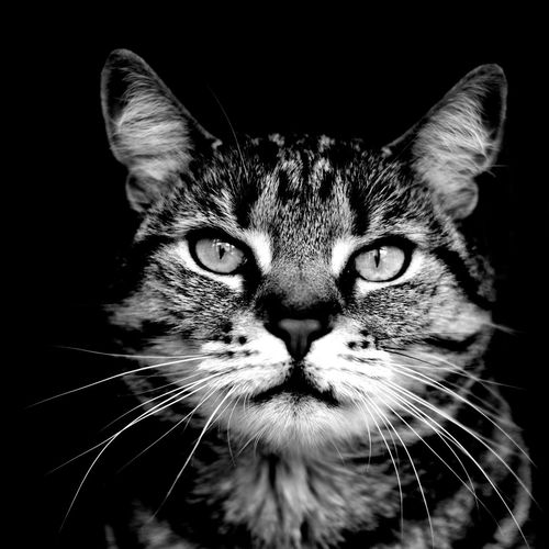 Close-up portrait of cat