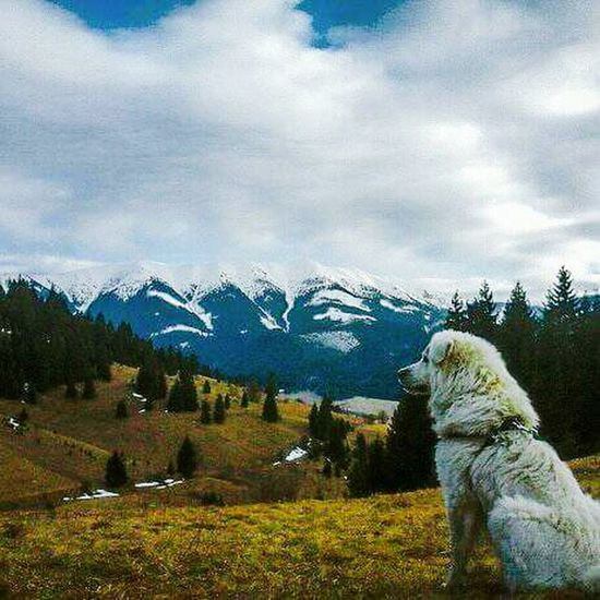 Landscape Mountain No People Cloud - Sky Nature Tree Beauty In Nature Outdoors Animal Themes Sky Day Mammal Nature Domestic Animals Polar Bear Animals In The Wild Love♥