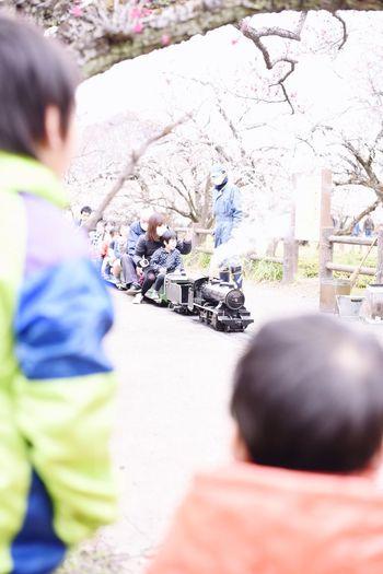 ミニSLに目が釘づけで動かなくなる兄弟。越生の梅林です。ほんとに石炭を燃やして動いてます^_^* Living Life Japan Snapshots Of Life Kids Being Kids SL