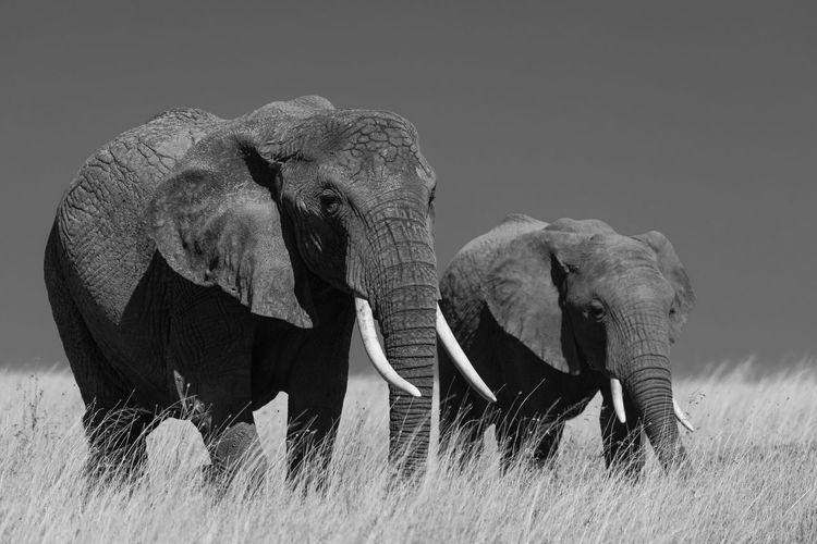 Close-up of elephant on landscape