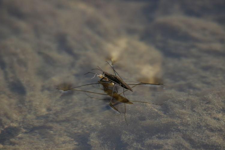 Animals In The Wild Bei Der Vermehrung EyeEm Nature Lover Focus On Foreground Nature Selective Focus Wasser Wasserläufer