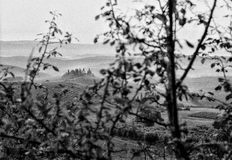 Val d'Orcia Filmphotography Italy EyeEm Tuscany Travel Destinations Plant Tree No People Nature Day Growth Full Frame Beauty In Nature Land Tranquility Outdoors Branch