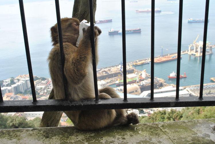 Monkey On Window By Sea Against Sky