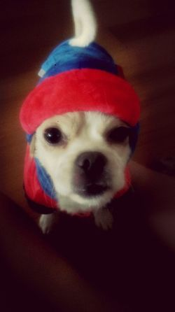 New clothes^^ New Look Pets My Dogs Are Cooler Than Your Kids Dog Lover