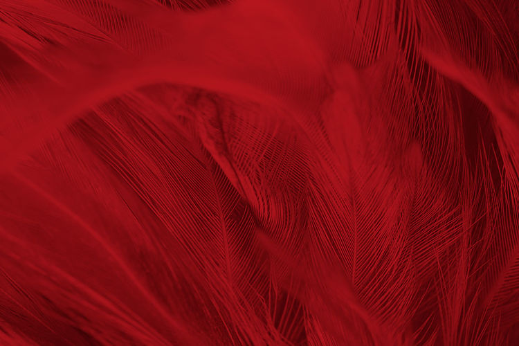Abstract Animal Animal Body Part Backgrounds Close-up Feather  Full Frame Hair Indoors  Lightweight Motion Nature No People Pattern Red Rippled Softness Textile Textile Industry Textured