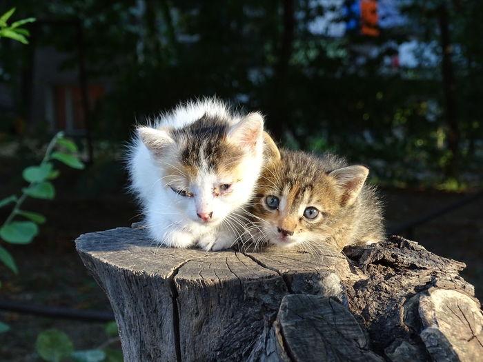 Taking Photos Photography Radev_photography Cute Cats