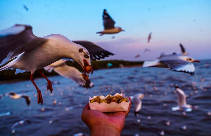Cropped image of hand feeding seagulls