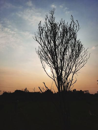 Silhouette bare tree on field against sky at sunset