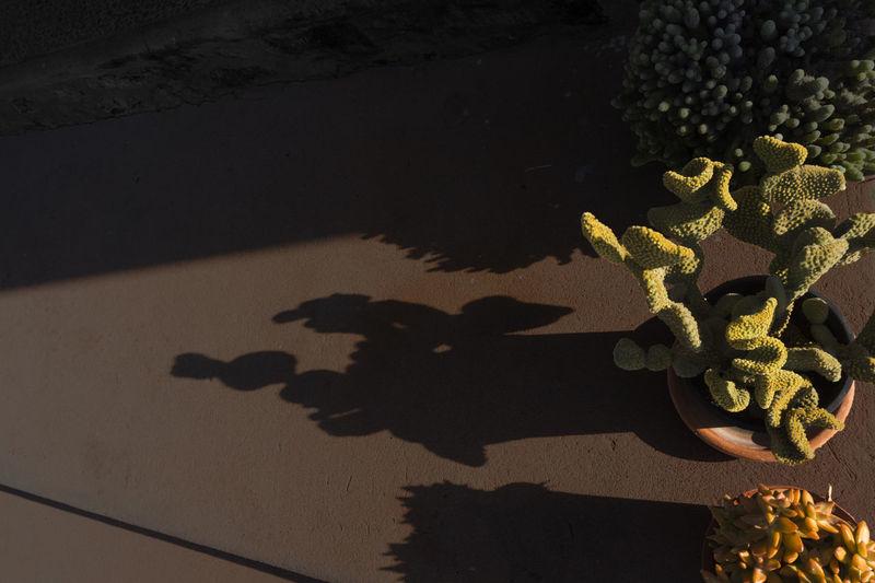 Shadow of silhouette tree
