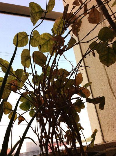 Garden flowerpot First Eyeem Photo