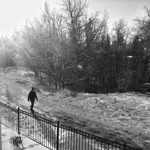 Cold weather and winter walk... Yeg Cold Winter Iphonephotoacademy IPS2015Trees B&w Iphone6 Iphoneonly Eyeem Canada