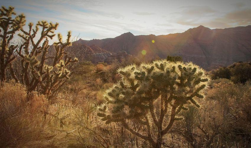 Plants On Desert Against Sky