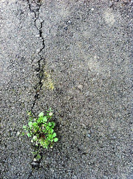 ど根性系 Check This Out EyeEnNatureLover Nature Photography Nature_collection Japan Photography Green